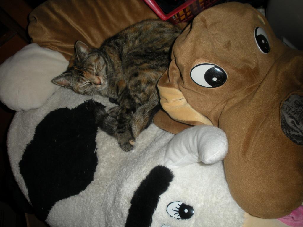 Mea, la gatta che ama la compagnia dei pupazzi